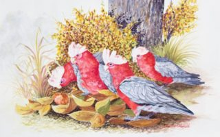 A Watercolour painting by Ellen Lee Osterfield in the Realist style  depicting Birds with main colour being Grey Ochre and Pink and titled Autumn turns to Spring