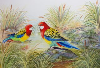 A Watercolour painting by Ellen Lee Osterfield in the Realist style  depicting Birds with main colour being Blue Green and Red and titled Eastern Rosellas