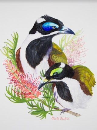 A Watercolour painting by Ellen Lee Osterfield in the Realist style  depicting Birds with main colour being Black Blue and Green and titled Blue Faced Honey Eaters
