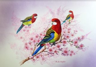 A Watercolour painting by Ellen Lee Osterfield in the Realist style  depicting Animals Birds with main colour being Blue Green and Pink and titled Eastern Rosellas in Blossom