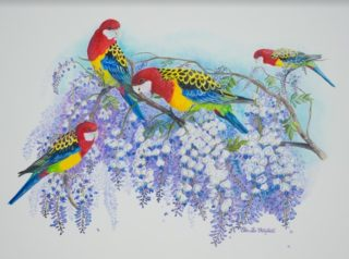 A Watercolour artwork by Ellen Lee Osterfield in the Realist style  depicting Animals Birds with main colour being Green Purple and Red and titled Eastern Rosellas in Wisteria