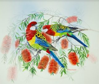 A Watercolour artwork by Ellen Lee Osterfield in the Realist style  depicting Animals Birds with main colour being Green and Red and titled Eastern Rosellas in Bottlebrush