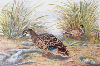 A Mixed Media painting by Ellen Lee Osterfield in the Realist style  depicting Animals Birds with main colour being Brown Ochre and Olive and titled Black Ducks