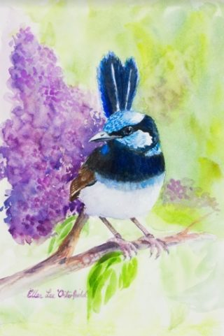 A Watercolour painting by Ellen Lee Osterfield in the Realist style  depicting Birds with main colour being Blue Green and Purple and titled Blue Wren with Lilac
