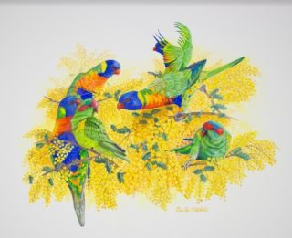 A Watercolour painting by Ellen Lee Osterfield in the Realist style  depicting Birds and Flowers with main colour being Blue Green and Orange and titled Rainbow Lorikeets in Wattle