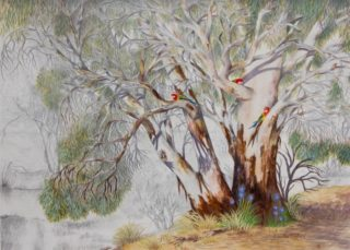 A Watercolour painting by Ellen Lee Osterfield in the Realist style  depicting Trees Birds with main colour being Brown Grey and Ochre and titled River Redgums