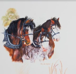 A Watercolour artwork by Ellen Lee Osterfield in the Realist style  depicting Animals and Horses with main colour being Brown and White and titled Teamwork III