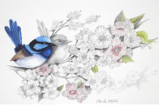 A Mixed Media artwork by Ellen Lee Osterfield in the Realist style  depicting Birds with main colour being Blue Grey and Pink and titled Blue Wren Pair
