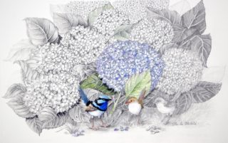 A Mixed Media painting by Ellen Lee Osterfield in the Realist style  depicting Birds Beach and Flowers with main colour being Blue and Grey and titled Blue Wren and Hydrangeas