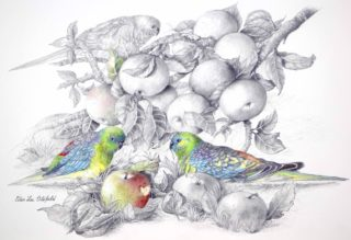 A Mixed Media painting by Ellen Lee Osterfield in the Realist style  Birds with main colour being Blue Green and Grey and titled Red Rumped Parrots #2