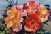 Amanda Aish-20-Breathing Sunlight-OzArt Finder