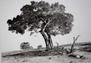 An Ink painting by Ellen Lee Osterfield in the Realist style  depicting Landscape Trees with main colour being Blue Grey and White and titled Safe Haven