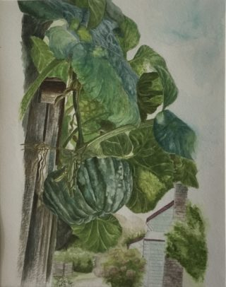A Watercolour artwork by Renee Loh in the Realist style  depicting  Food and titled The hanging Pumpkin at Trentham