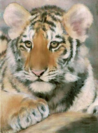 An Oil painting by Lilly Antoneavic in the Realist style  depicting Animals and titled Tiger Cub