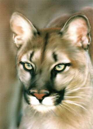 A Pastel painting by Lilly Antoneavic in the Realist style  Animals and Cats with main colour being Brown and Green and titled PUMA STARE