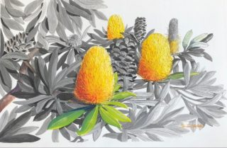 A Mixed Media painting by Ellen Lee Osterfield in the Realist style  depicting Flowers with main colour being Grey and Yellow and titled Coastal Banksia