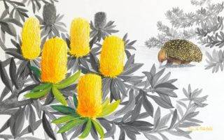 A Mixed Media artwork by Ellen Lee Osterfield in the Realist style  depicting Animals and Flowers with main colour being Grey Ochre and Yellow and titled Coastal Banksia with Echidna