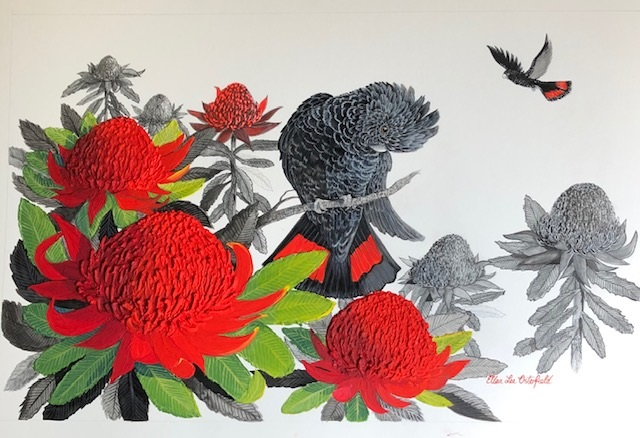 Mixed Media Painting by Ellen Lee Osterfield titled Red tailed black cockatoo with Red Waratah