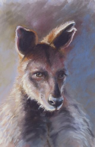 A Pastel artwork by Diana Bradshaw in the Realist style  depicting Animals with main colour being Black and Brown and titled Joga - Swamp Wallaby