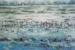 Janis Stapleton-78-Lilies in the Mist Kakadu-OzArt Finder-f135a8b1