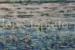 Janis-Stapleton-84-Morning-Mist-Kakadu-OzArt-Finder (002)-099a1fdd