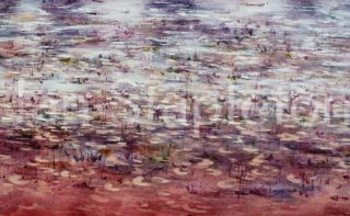 An Acrylic painting by Janis Stapleton depicting Landscape Flowers Outback and Swamp with main colour being Blue Grey and Purple and titled Lilies Magenta Violet