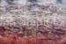 Janis Stapleton-88-Lilies Magenta Violet-OzArt Finder (002)-c6ef0082