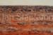 Janis Stapleton-90-Mulga Spinifex Halls Creek WA-OzArt Finder (002)-55495697